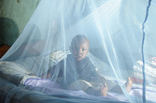 malaria net africa.jpg